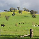 Rolling Hills! by Kymbo