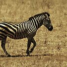 Stripes in Motion by Robin Hayward