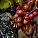 The Crown Of Life ~ Grapes ~ by Charles & Patricia   Harkins ~ Picture Oregon