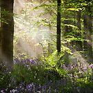 Bluebell Light by GaryMcParland