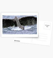 Dive ! Postcards