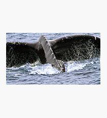 Dive ! Photographic Print