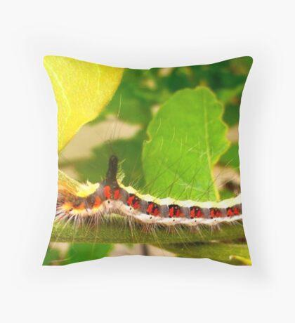 Acronicta psi caterpillar Throw Pillow