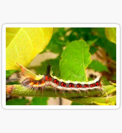 Acronicta psi caterpillar Sticker