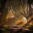 Morning Light by GaryMcParland