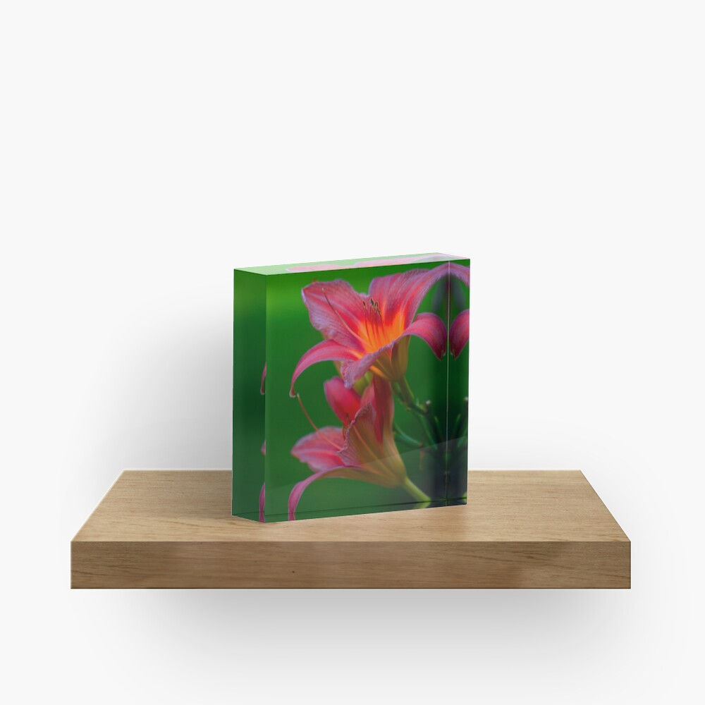 The beloved Lily by Yannis Lobaina  Acrylic Block