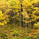 Hillside Fall - Japan by Norman Repacholi