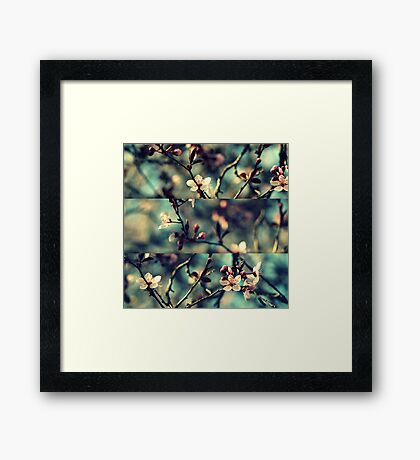 Vintage Blossoms - Triptych Framed Print