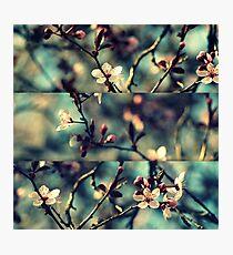 Vintage Blossoms - Triptych Photographic Print