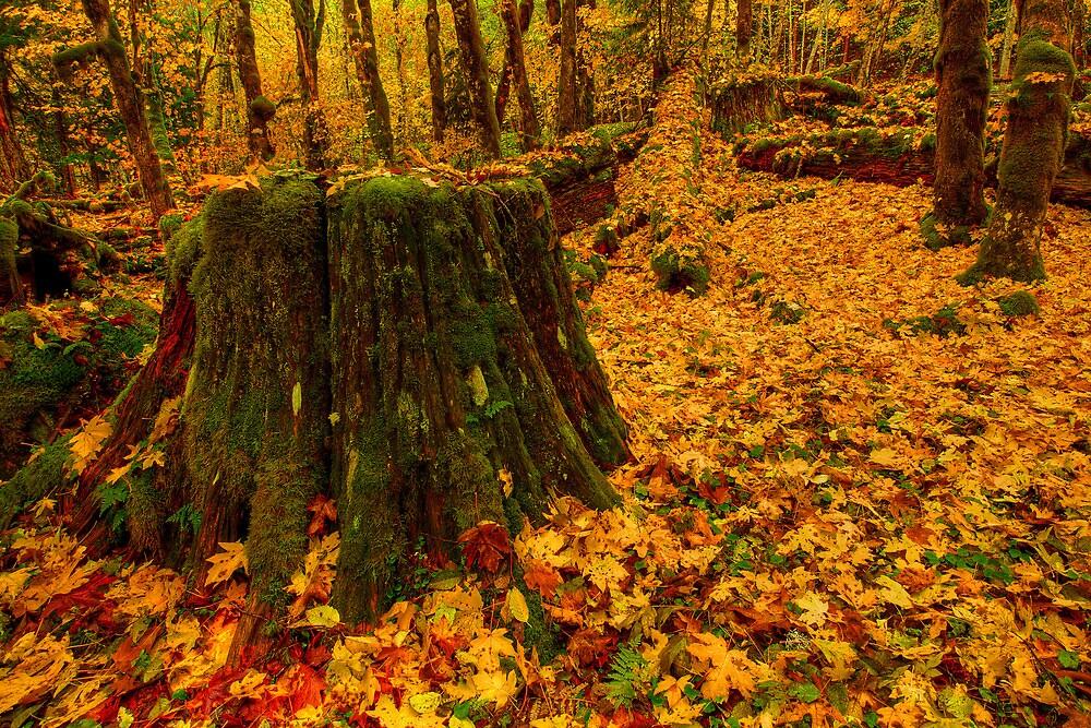 Fall Leaves Mosaic by Dan Mihai