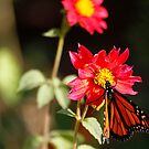 Butterfly and flower by Dennis Cheeseman