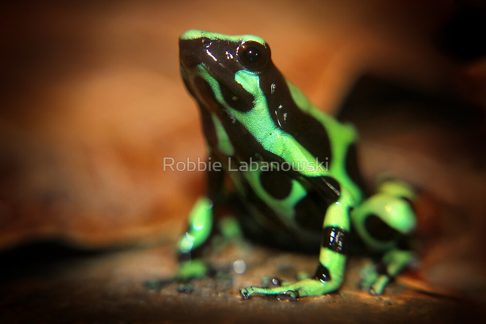 Green And Black Poison Dart Frog by Robbie Labanowski