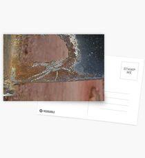 Huntsman Spider Postcards