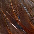 Colorful Peacock Feather in Detail by pjwuebker