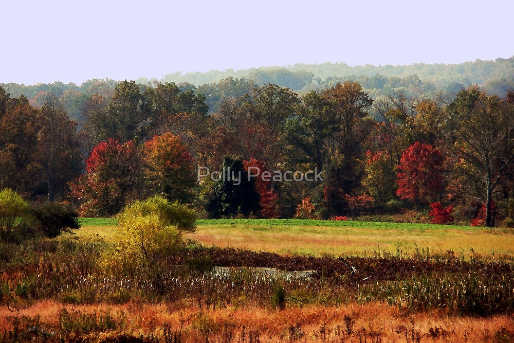 Fall Colors by Polly Peacock