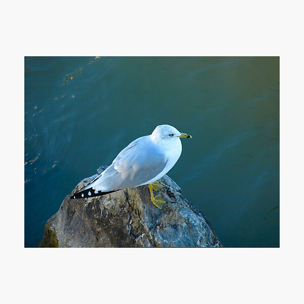 I'm Sitting On A Rock By A Lake In The Forest by Elisabeth and Barry King™ Photographic Print