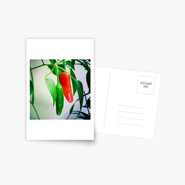 Green and red chillies Postcard