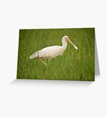 Spoonbill Greeting Card