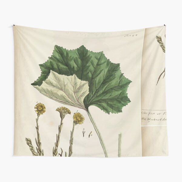 A curious herbal Elisabeth Blackwell John Norse Samuel Harding 1737 0522 Colts Foot or Poles Foot Tapestry