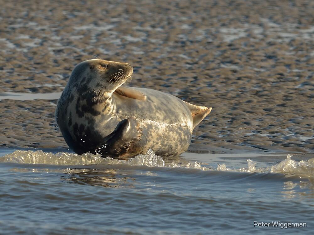 Seals - III by Peter Wiggerman