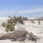 White Sands New Mexico by MaryAnnGrubb
