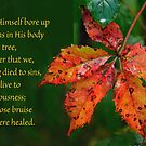 Bore our sins in His Body on the tree ~ 1 Peter 2:24 by Robin Clifton