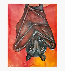 Flying Fox At Rest Photographic Print