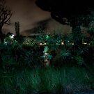 Night Fire Hydrant by Jacki Campany