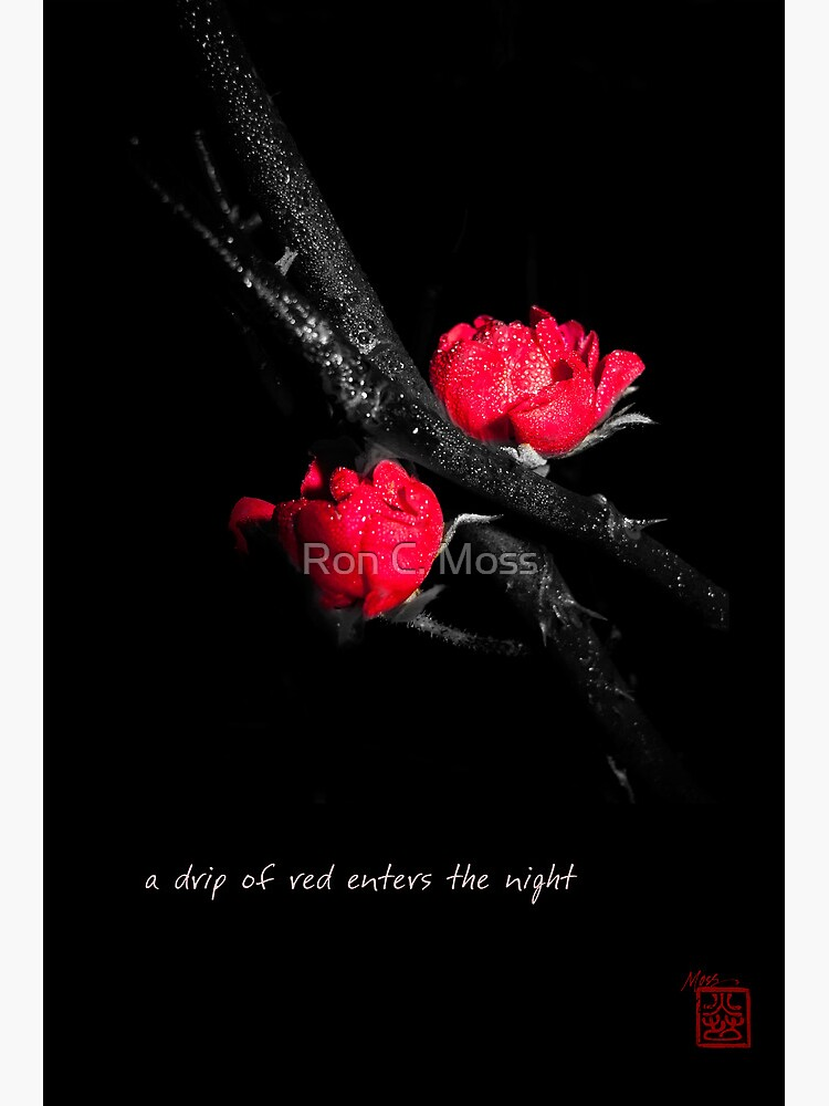 a drip of red by ronmoss