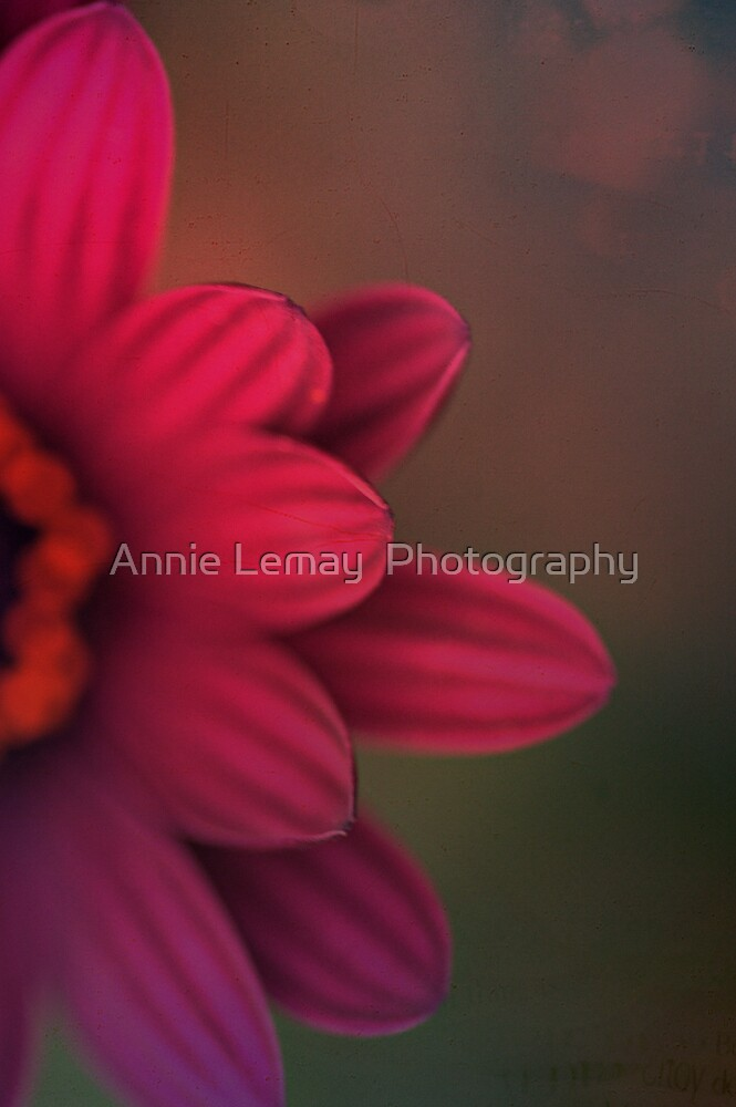 Flower Power by Annie Lemay  Photography