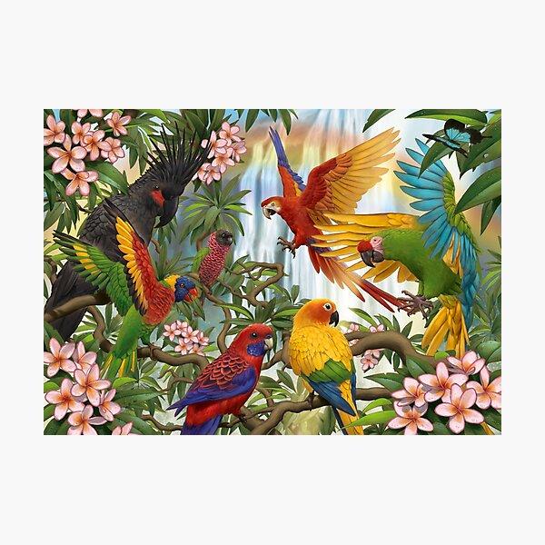 Parrot Rainbow Photographic Print