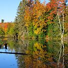 Autumn Tree Reflections by lorilee