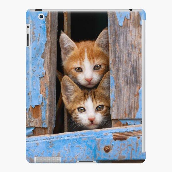 Cute Cat Kittens in a Blue Vintage Window iPad Snap Case