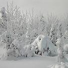 Snow by Hulko76