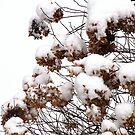 Hydrangeas In The Snow by Rusty Katchmer
