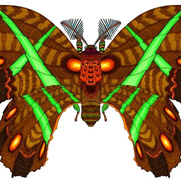 Callosamia Oak Moth by T-Raccoon