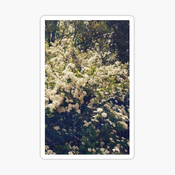 Bushes of White mellow flowers Sticker