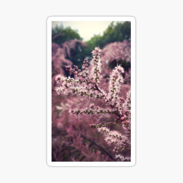 Tamarix pink flowers Sticker