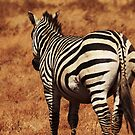 Rear Zebra by Robin Hayward