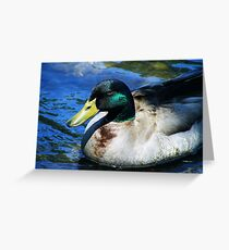 Rogue River Mallard Greeting Card