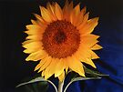 Sunflower on Blue Pillow by John Schneider