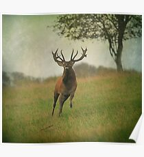 Charging Stag Poster