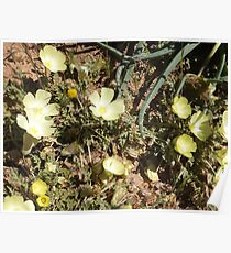 Geel blomme Poster