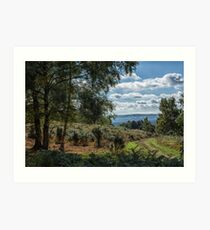 A walk on Woolbeding Common Art Print