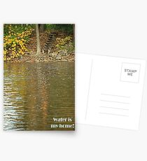 Water is my home! Postcards