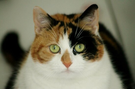 Calico Lil by Ladymoose