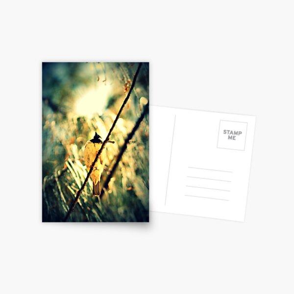Branch Birdie Postcard