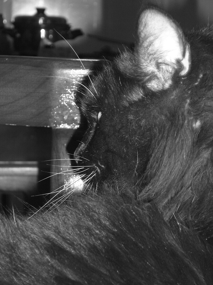 Black Cat by JuanEstebanV