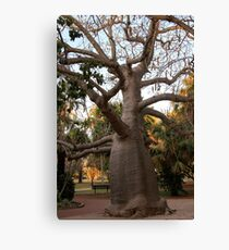 BOAB TREE, Broome Canvas Print