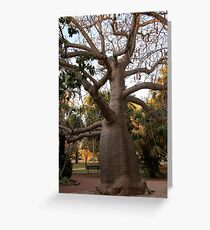 BOAB TREE, Broome Greeting Card